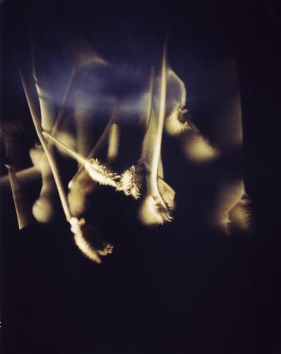 Ortographe-Tentativi-volo-2007-foto-di-Cesare-Fabbri-3-397x500.jpg