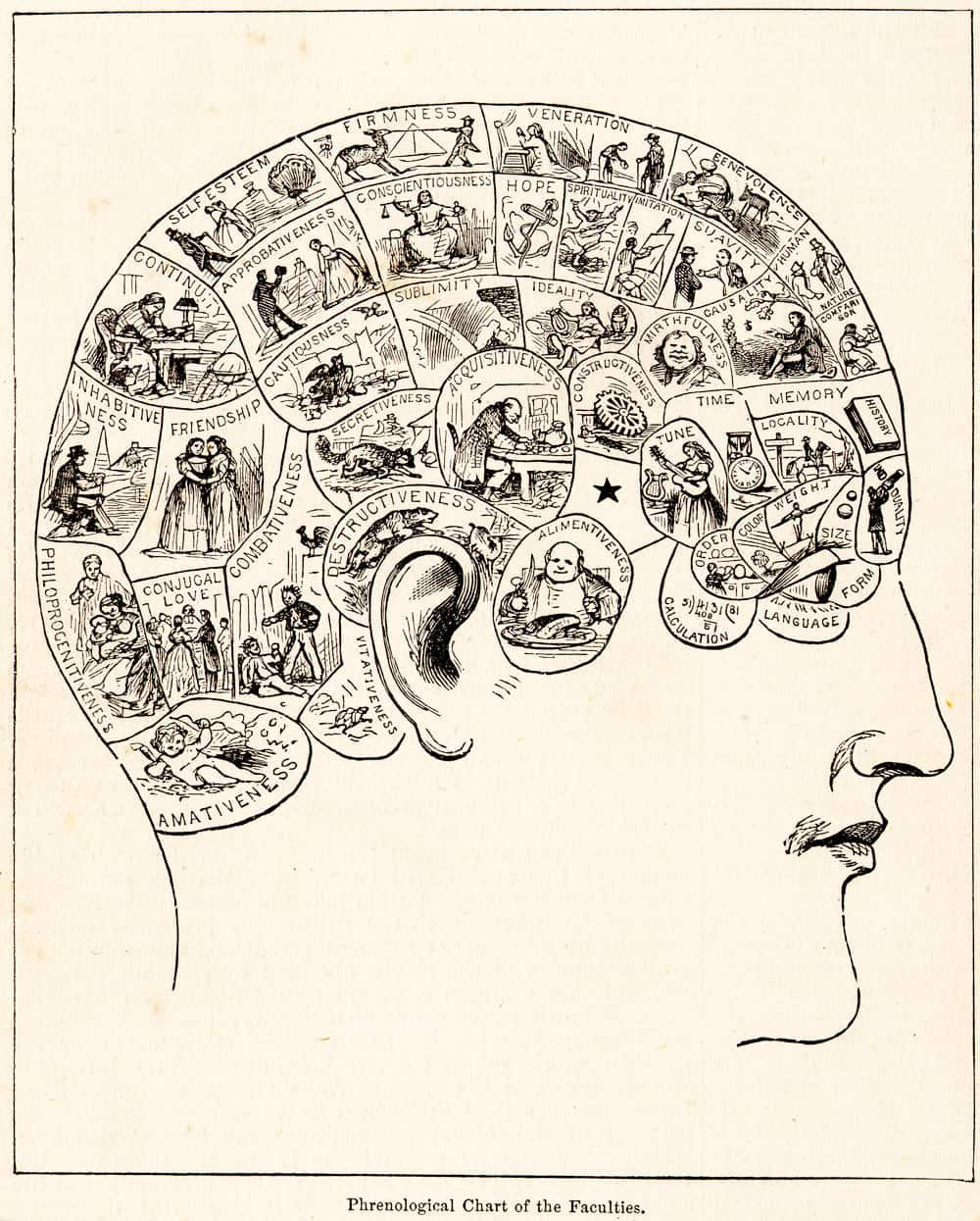 Peaple's Cyclopedia of Universal Knowledge: Phrenological Chart of the Faculties (1883)