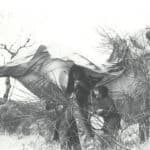 Giuliano Scabia. Il Gorilla Quadrumàno. 1974. Cattura del Gorilla. Foto di Amanzio Fiorini di Nismossa.